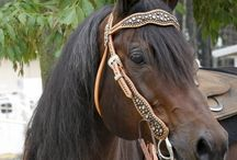 Horse tack and horse stuff / by Morgan Mourer