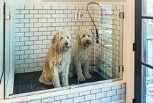 dogs shower