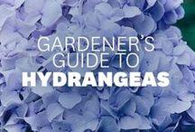 garden how-tos / tips and tricks for the garden