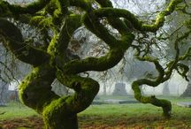 Wise trees / Trees are wise, they nourish and support us.