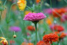flowers / flowers / by Diana Cheli