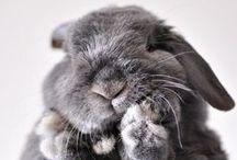ANIMAL | Cutes.