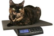 Cats: Health, Behavior and Lifestyle