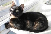 Conscious Cat Sunday: Feline Wisdom, One Purr at a Time