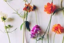 floral fiesta