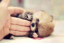 Cute / by Deena Carson