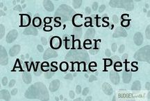 Dogs, Cats, & Other Awesome Pets / Love a daily dose of cuteness and helpful animal advice? See some of the best animal pictures, cute baby animal antics, and introduced to fantastic dog products and cat products that is perfect any pet parent. Of course, lots of Alaskan malamute love and awesome pet advice!!