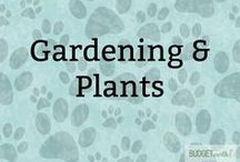 Gardening & Plants / Do you want to have your own home garden? Here are some awesome tips for getting started with your own garden, gardening tips, and designing your own fun fruit or vegetable garden.