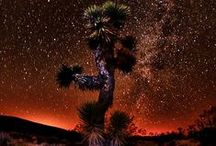Joshua Tree National Park / by Patricia H