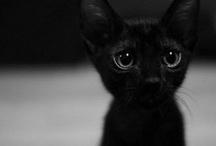Cute / by Mareli Basson