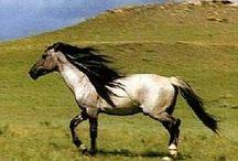 Majestic creatures - Horses