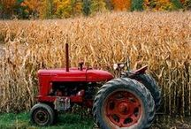 Fall Means Harvest Time / by Jodi Boe