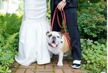 """TEP .  Puppy + Love  . / Nothing says """"Aww"""" like puppies and dogs being included in the most important day of your lives, your wedding day! This board features some of my favorite images I've taken of dogs at engagement sessions and even on wedding days!"""