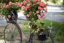 Bikes & Flowers