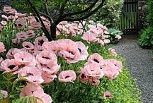 Gardening / by Christy Staton
