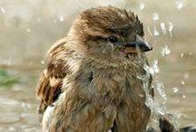 Birds, Birdcages & Birdhouses / Birds, Birds Nest,  Altered bird cages and bird houses