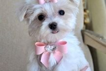 Pets & Animals / Awesome pics of cats and dogs