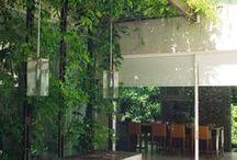 plants & Garden / by Weerapong Thongpiyapoom