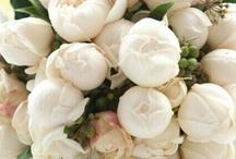 Fresh Florals / by Village Antiques