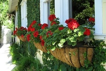 Window Boxes...Beautiful... / These window boxes are so beautiful. They add that personal touch!  / by Laurie Holycross