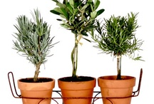 Plant Love / decorating with plants, how to use plants in your home, plants for your home, how to take care of plants, house plants outdoor plants