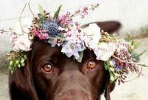 Dogs at Weddings / We love dogs and want to involve them in your big day!