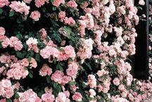 color inspiration | pink / Color palette inspiration!