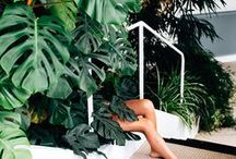 Tropical / Inspiration for throwing a chic tropical affair!
