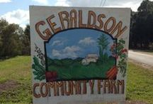 Geraldson's Community Farm NW Bradenton / Geraldson's Community Farm in NW Bradenton is open to the public on Sunday's from 9:00-3:00 and you can buy organic eggs, all goats milk products, honey bee products and fresh produce of many types.