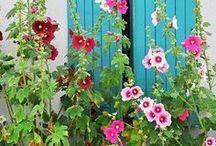Garden Love / In the garden