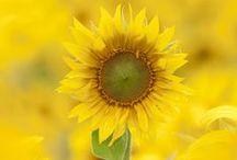 Flowers / by Bobbie Hales