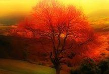 Autumn/Fall / by Bobbie Hales