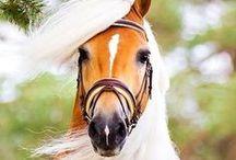 Horses / by Bobbie Hales