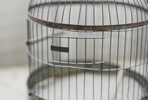 Love of birdcages / Birdcages