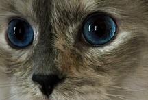 Cats / by Patricia Niemiec