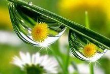 Dew Drops / by Bobbie Hales