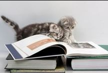 Reading Buddies / Animals and pets read books too :) / by Sarah Allen