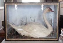 Taxidermy / by Beverly Howell Gray