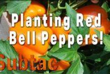 Organic Gardening / All Things Organic Gardening