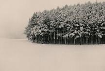 winter / by Laura Harris