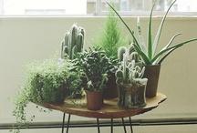 greenery & floral friends / green, growing things / by Laura Harris