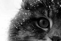 funny animals / by Tanja Winterhoff