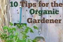GARDENING / How to and tips for planting your garden