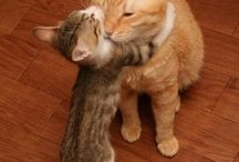 Gatos / Maravillosos!