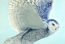 Awesome Owls / by Hannah Minor