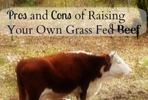 HOMESTEADING / Living off grid ,  sustainable living, homesteading, DIY