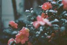 Botanicalove