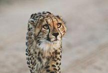 Beautifully odd  animals