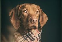 Dogs / I have a goofy Weimaraner, he's always doing silly things and making me laugh. I enjoy watching dogs for inspiration. Here's a bunch of dog stuff for dog lovers.