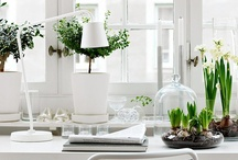 Eco-Chic / Trendiness + Environment. Greener life without losing a sense of style / by Hazel Anne
